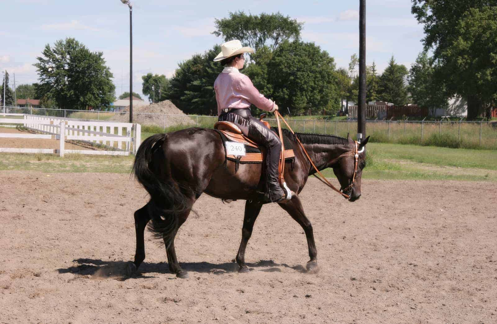 Do Western Saddles Distribute Pressure Evenly The Horse