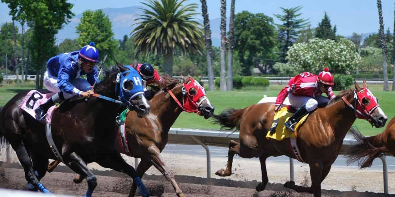 Catastrophic injuries in racing quarter horses studied the horse catastrophic injuries in racing quarter horses studied falaconquin