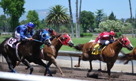 Catastrophic Injuries in Racing Quarter Horses Studied