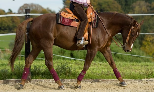 Muscular Disorders in Athletic Horses