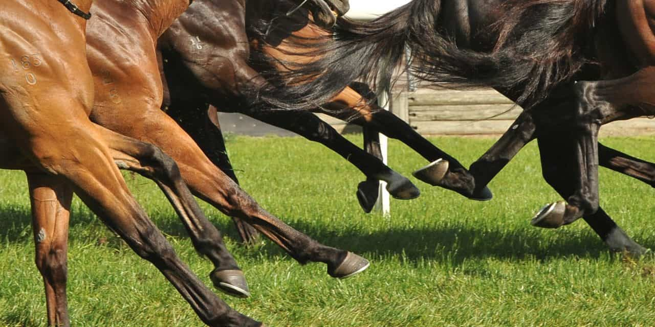 Necropsies Teaching About Catastrophic Racehorse Injuries