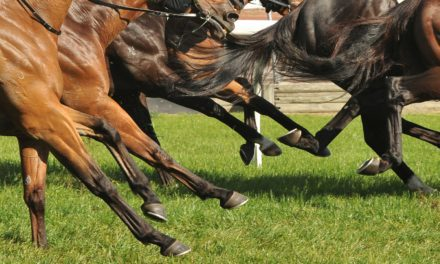 University of Melbourne Vets Aim to Improve Racehorse Safety
