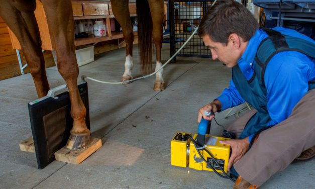 A Guide to Equine Diagnostic Imaging