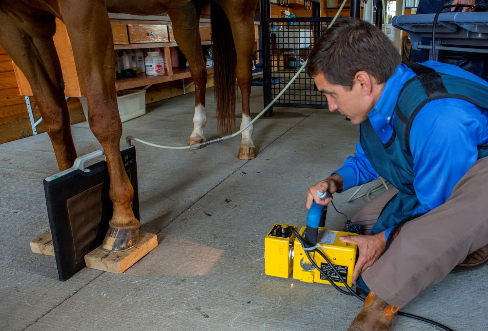 A Guide to Equine Diagnostic Imaging – The Horse