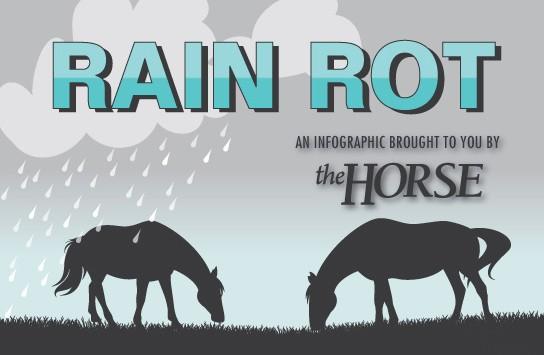 Rainrot Infographic Thumbnail