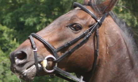 An Ethogram for Ridden Horse Facial Expressions of Pain