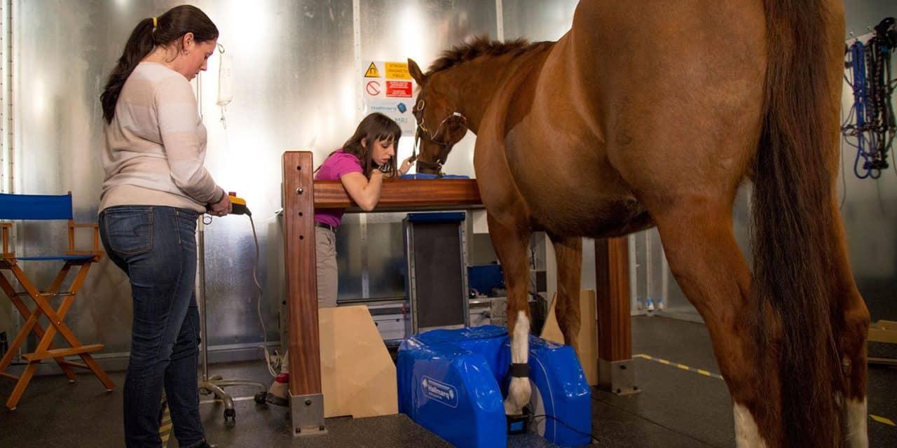 Standing MRI in Horses
