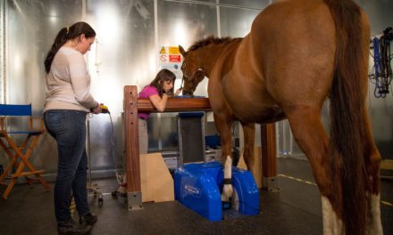 From Hoof Testers to MRI