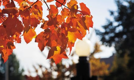 Toxin Topic: Red Maple Toxicosis