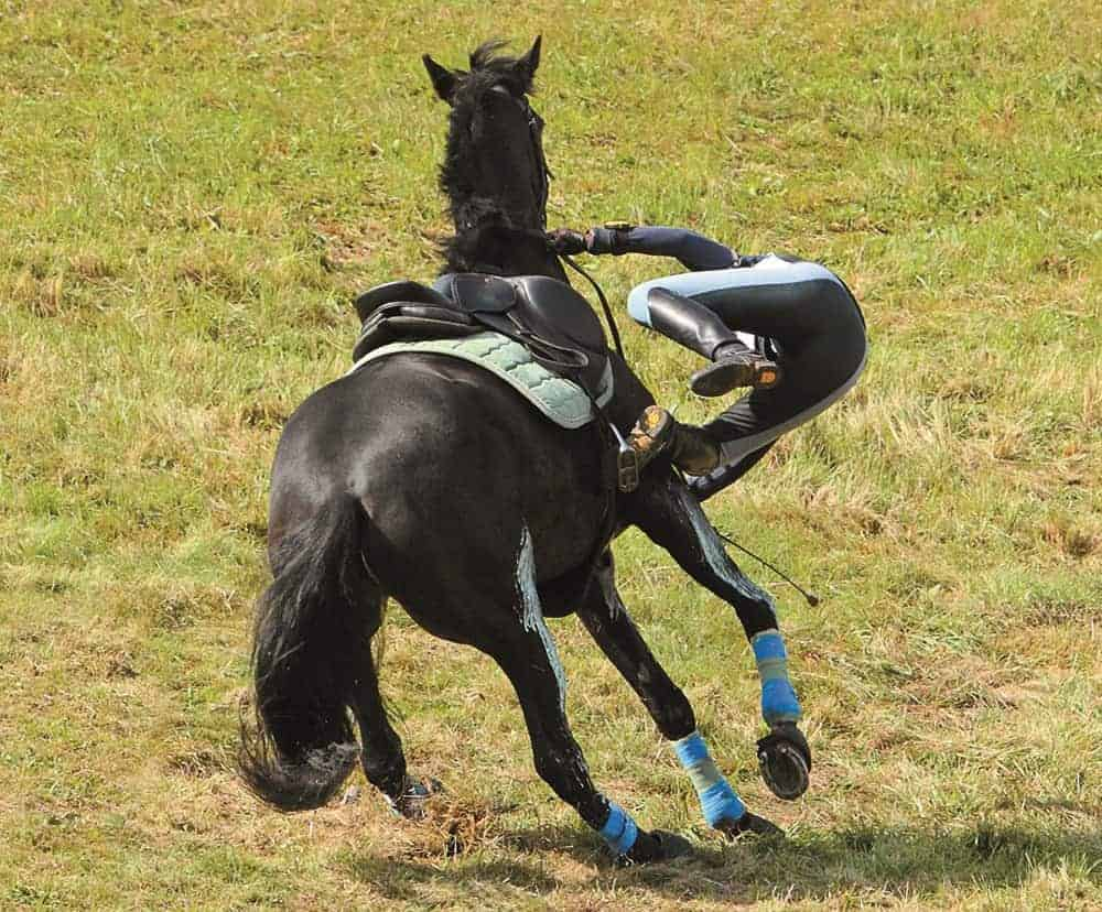 Liability Releases For Equine Businesses The Horse