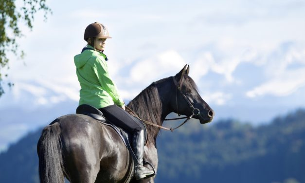 Choosing the Right Horse for Happy Trails