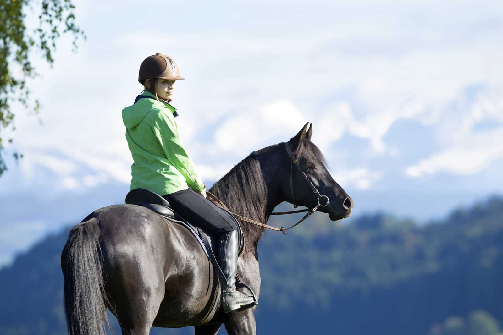 Choosing The Right Horse For Happy Trails The Horse