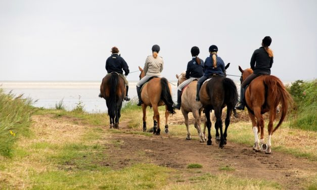 Are Trail Horses at Risk for EHV?