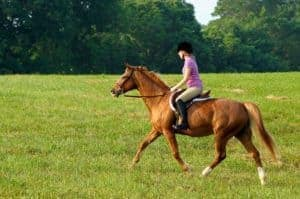 Riding Horse in Field