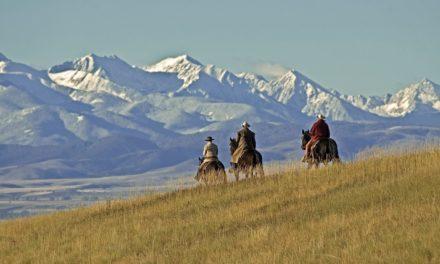 Poll Recap: Ravishing Rides