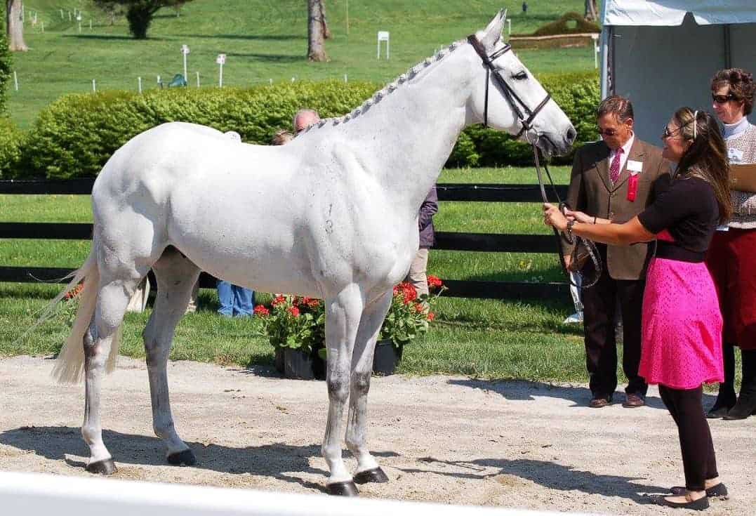 Three-Day Eventing Horse Inspections