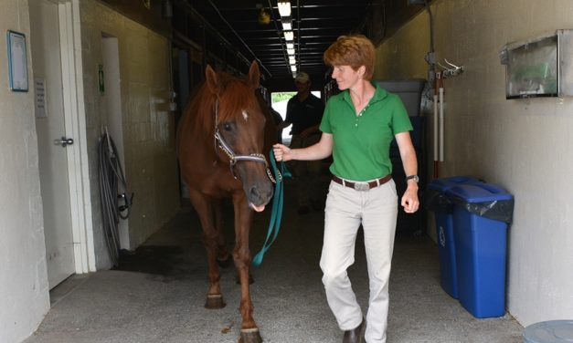 Researchers Study Equine Blood Transfusions