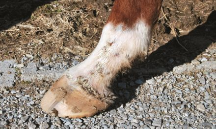 10 Equine Skin Problem Resources on TheHorse.com