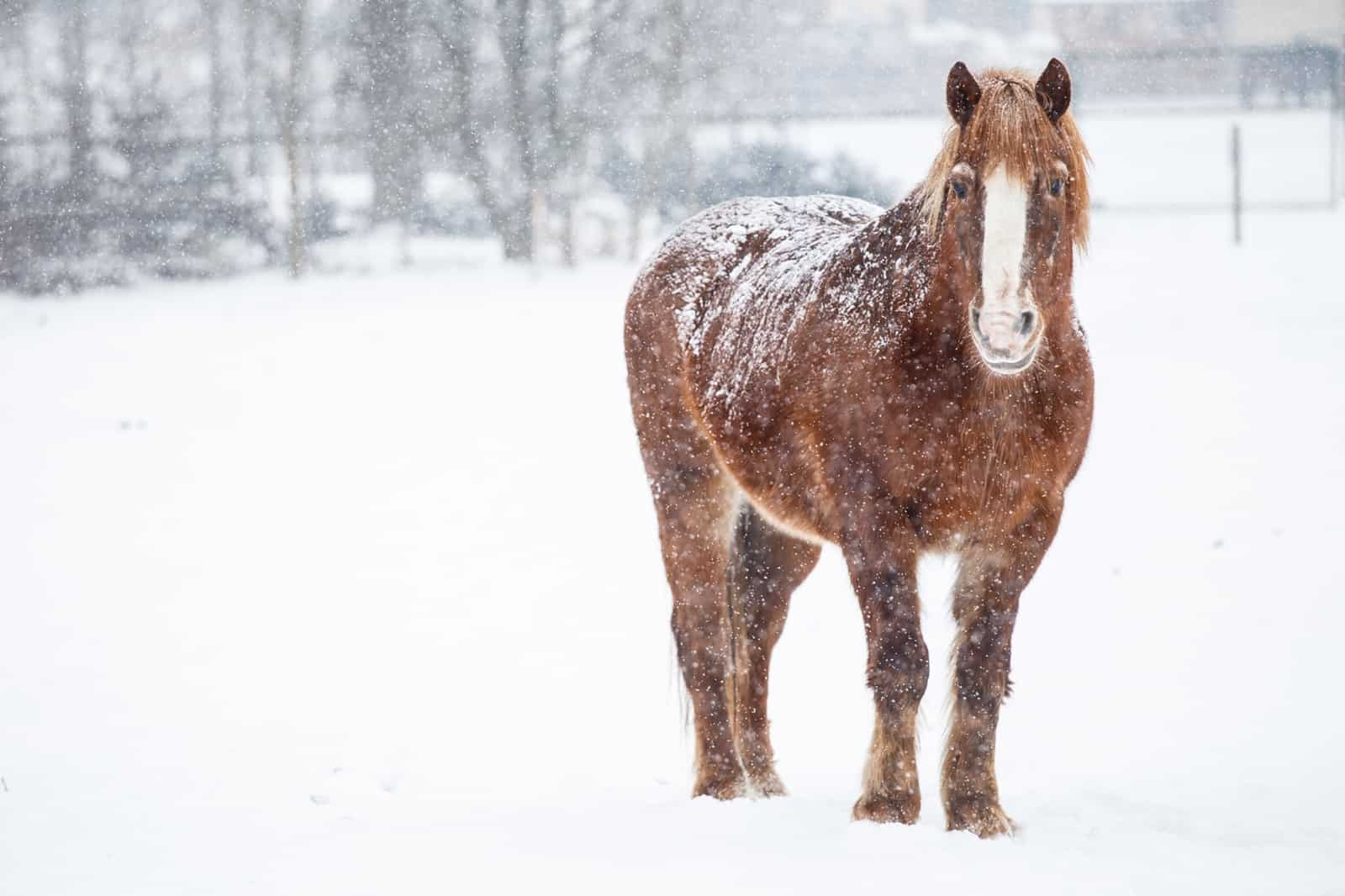 Senior Horses in Cold Weather – The Horse