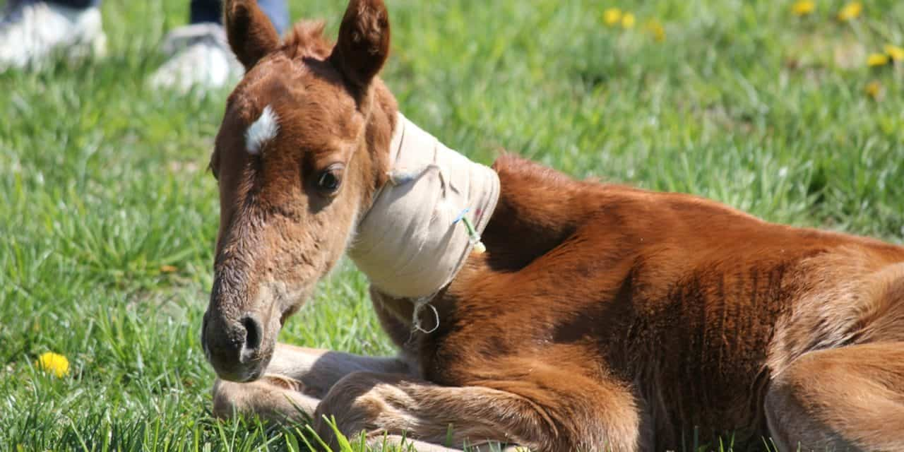 health problems in newborn foals the horse