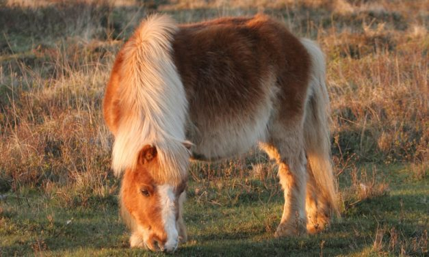 How Old is My Pony?