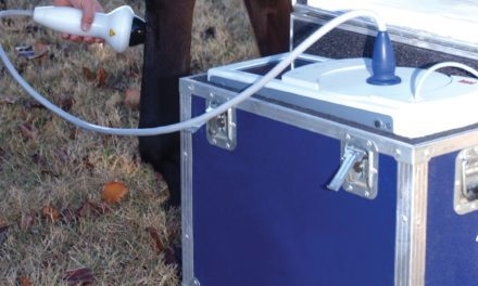 Treating PSD in Sport Horses: Surgery, Shock Wave, or Both?