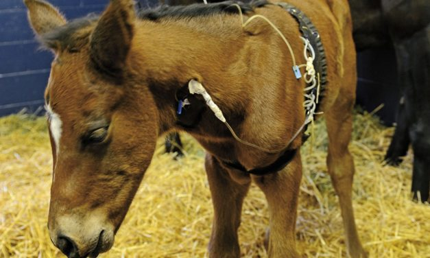 Managing and Preventing <em>R. equi</em> Pneumonia in Foals