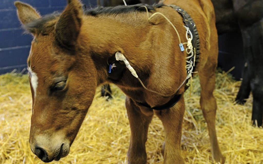 researchers confirm igg values for predicting foal survival the horse