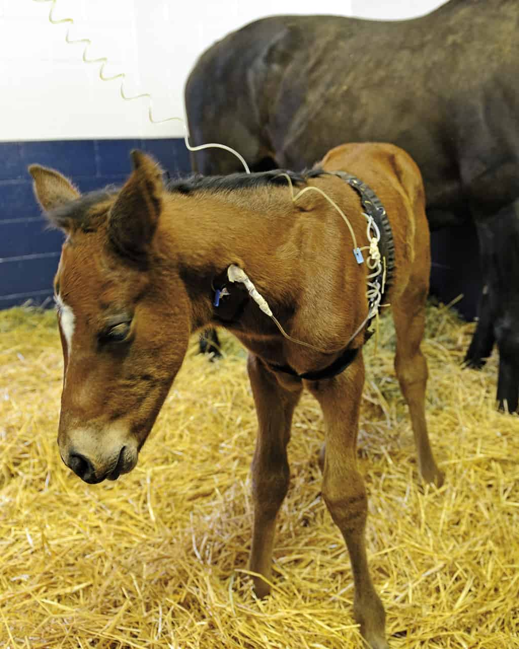 Foal And Adult Horse Blood Samples: What's The Difference