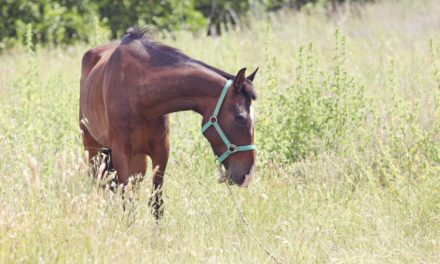 Equine Guelph Launches 'Full-Circle Responsibility'