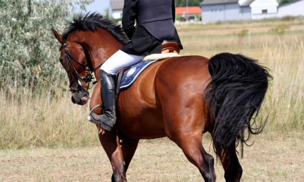 Saddle Science: Tree Width's Effect on Horses' Thoracic Spines