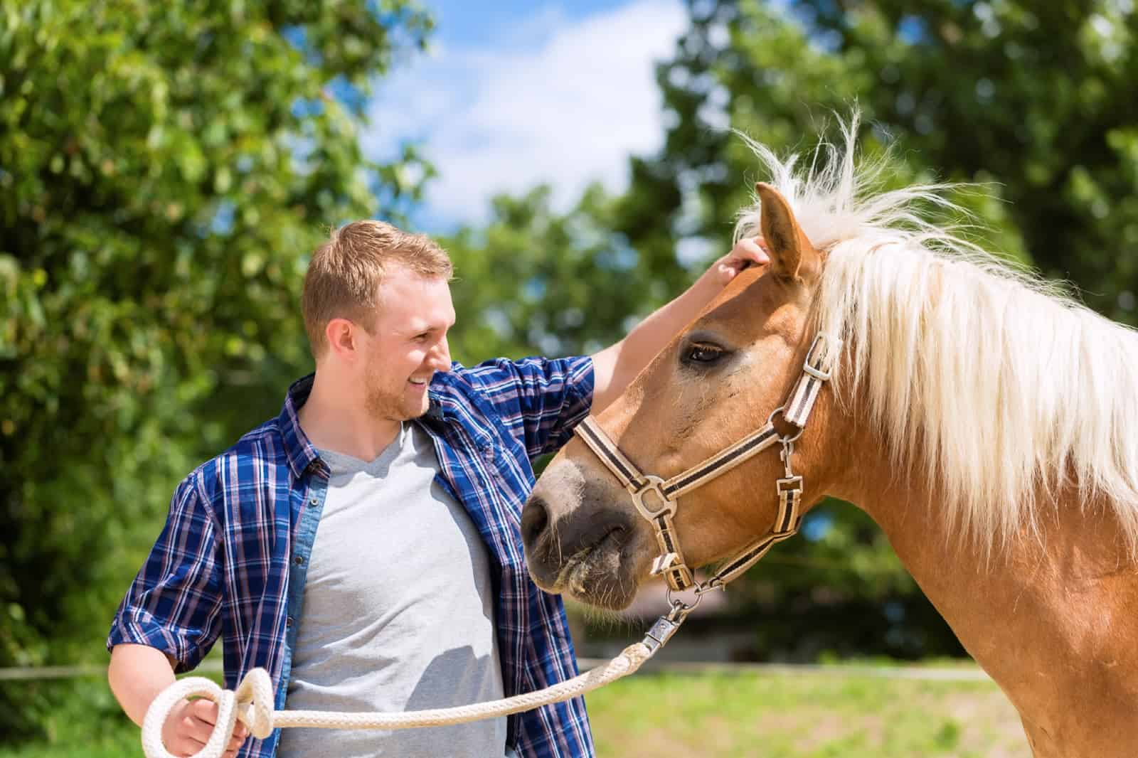 horses can smell fear