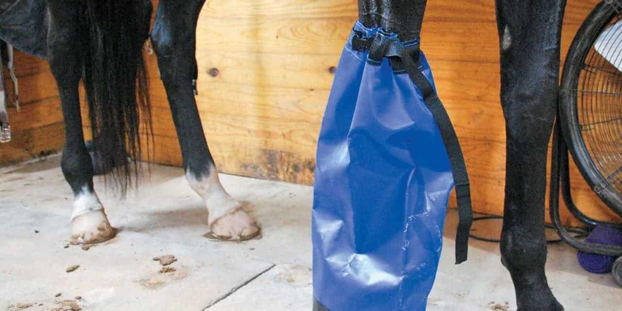 Poll Recap: Addressing Hoof Abscesses – The Horse