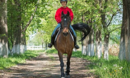 How Do Nutritionists Define 'Recreational Horses'?