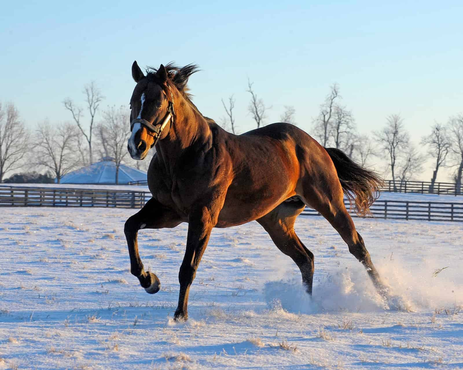 Humane Housing Options for Stallions