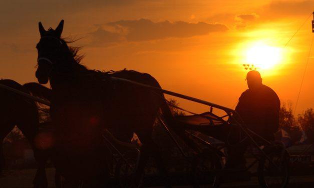 Cobalt Administration Can Put Horses, Humans at Risk