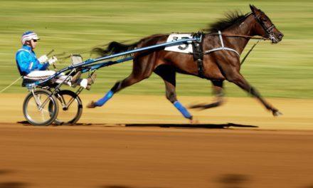 Horse Gaitedness: It's in the Genes