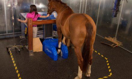Equine Diagnostic Imaging 101