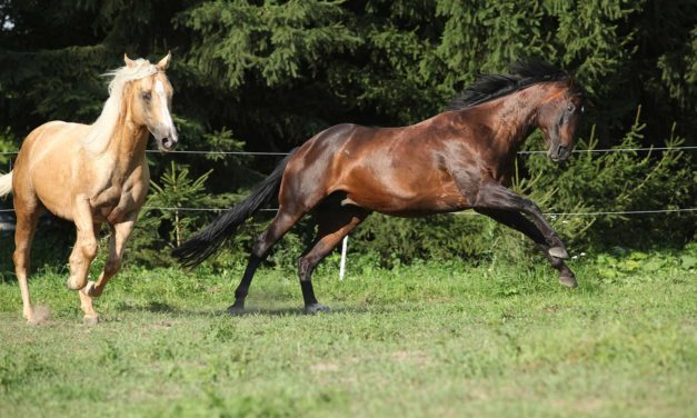Can Diet Make a Horse 'Crazy'?