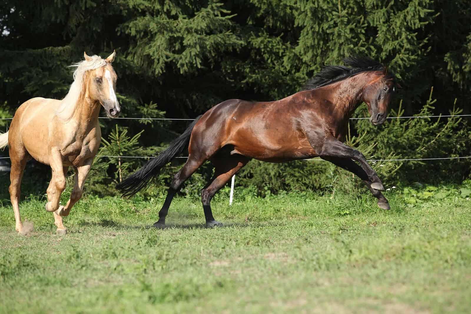 feeding hot horses