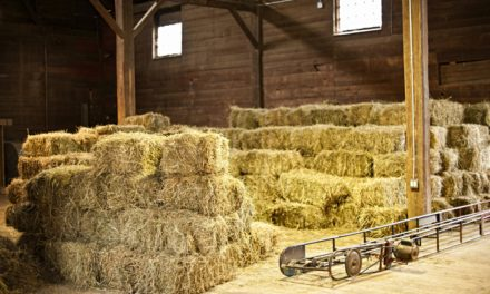 Tips for Maintaining a Healthful Hay Loft