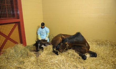 Equine Reproduction–The Essential Elements