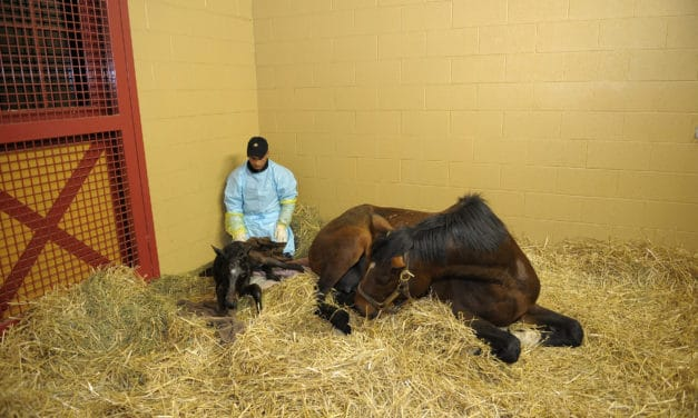 2011's Top Equine Reproduction News (AAEP 2011)