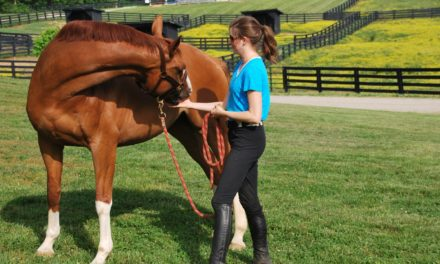Equine Physical Therapy: What Are Your Options?