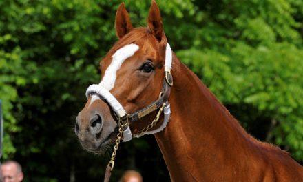 2009 Belmont Stakes Winner Summer Bird Dies