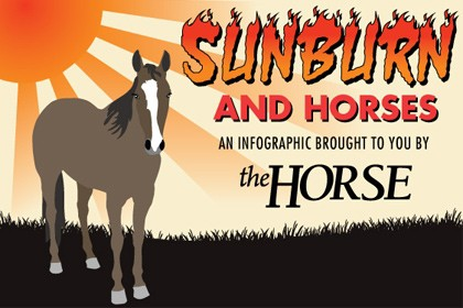 Infographic: Sunburn and Horses