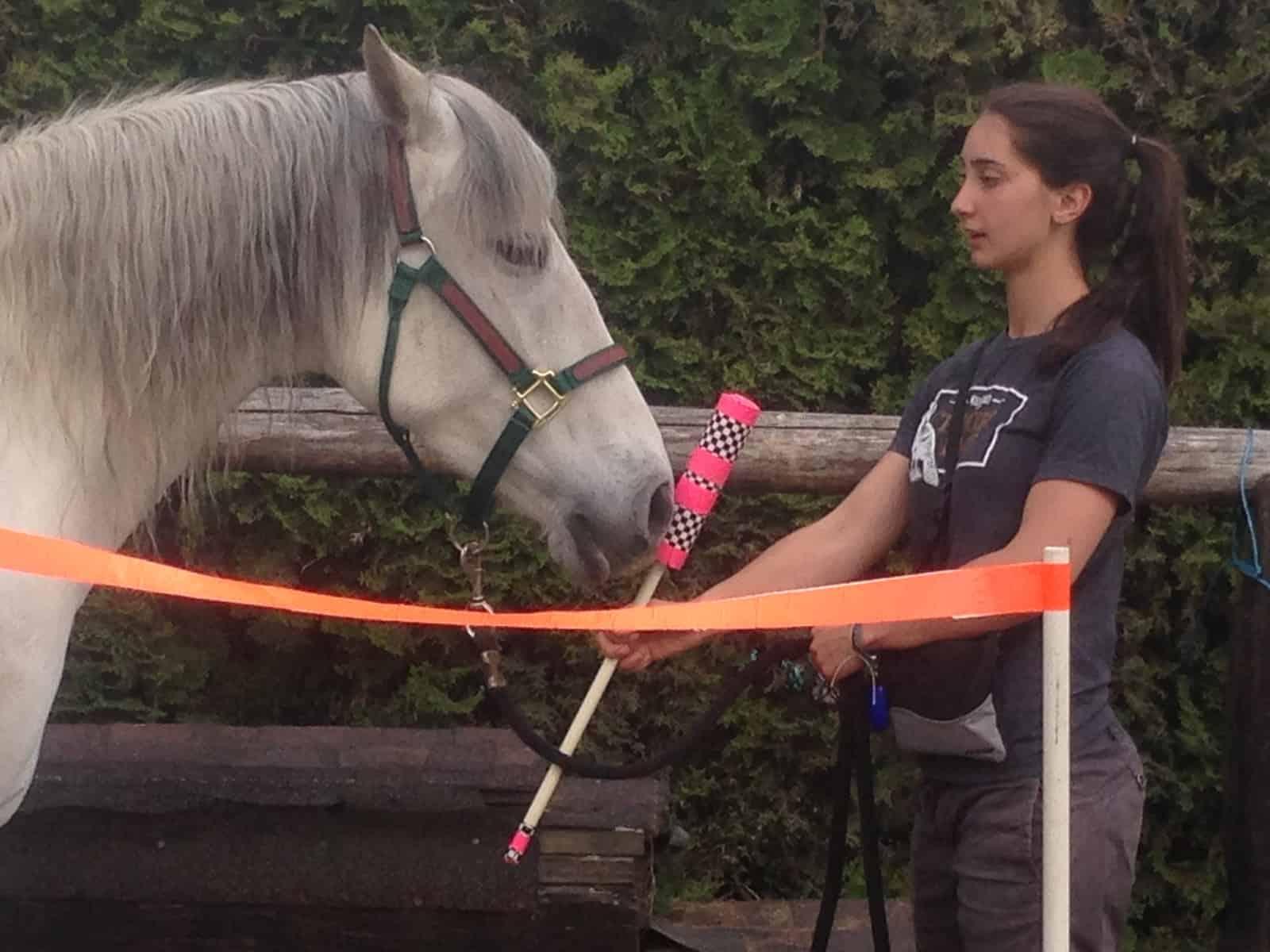 Does Target Training Help Reduce Horses' Stress?