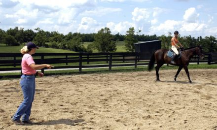 Poll Recap: Training Across Riding Disciplines