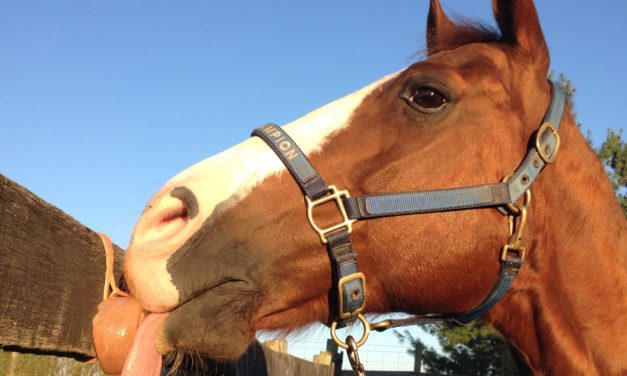 Is There a 'Right Kind of Salt' for Horses?