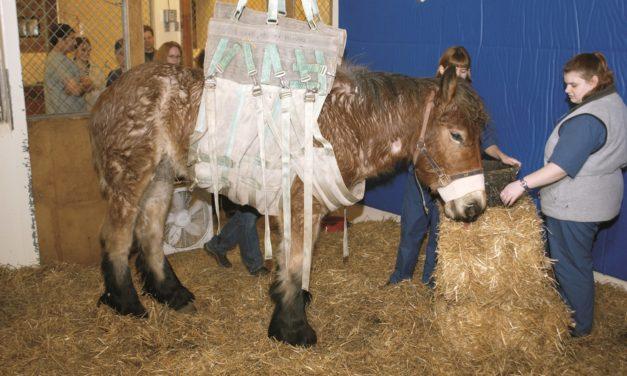 Botulism in Horses: An Update